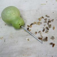 加工 ひょうたん ひょうたんの加工・栽培、仕上げ方法!マニアの私のノウハウ